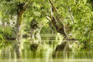 Le Parc Naturel Régional du Marais Poitevin
